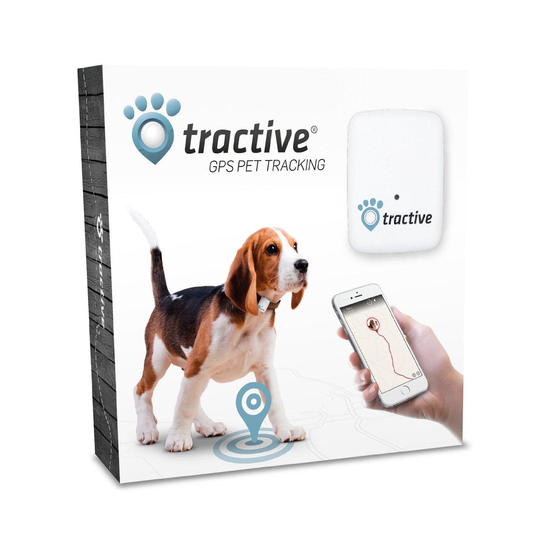 """Der """"Tractive GPS Tracker für Hunde und Katzen"""" – Auf den Spuren unserer Vierbeiner?"""